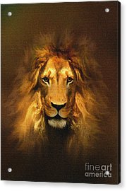 Golden King Lion Acrylic Print by Robert Foster