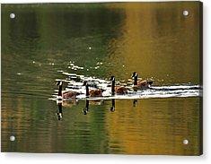 Golden Lake Acrylic Print