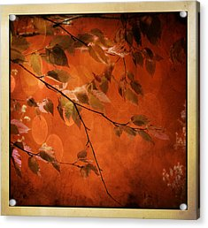 Golden Leaves-1 Acrylic Print by Nina Bradica
