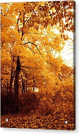 Golden Leaves 2 Acrylic Print by Jocelyne Choquette