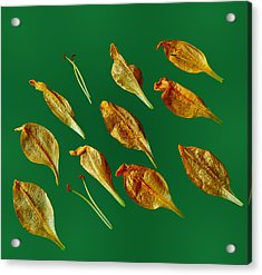 Acrylic Print featuring the photograph Golden Leaves by Marwan Khoury