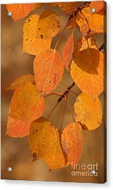 Golden Leaves Acrylic Print by Stephen Thomas