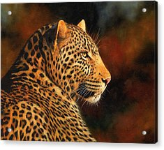 Golden Leopard Acrylic Print by David Stribbling
