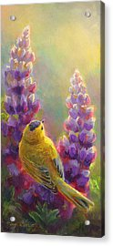 Golden Light 1 Wilsons Warbler And Lupine Acrylic Print