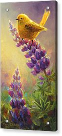 Golden Light 2 Wilsons Warbler And Lupine Acrylic Print
