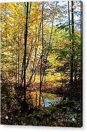 Golden Light Acrylic Print by Linda Marcille