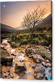 Golden Light River Acrylic Print by Maciej Markiewicz