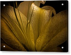 Acrylic Print featuring the photograph Golden Lily by Dave Garner