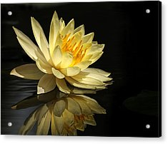 Golden Lotus Acrylic Print