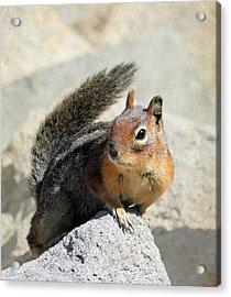 Golden Mantle Ground Squirrel Acrylic Print
