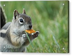 Acrylic Print featuring the photograph Golden-mantled Ground Squirrel by Susan D Moody