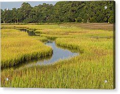 Golden Marsh Acrylic Print