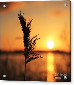 Golden Morning Acrylic Print by LHJB Photography