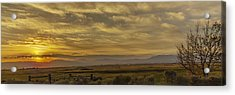 Golden Morning Acrylic Print by Nancy Marie Ricketts