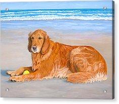 Golden Murphy Acrylic Print
