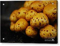 Golden Mushrooms Acrylic Print by Susan Hernandez