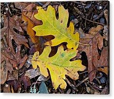 Golden Oak Leaf Duet Acrylic Print