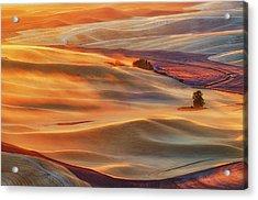 Golden Palouse Acrylic Print