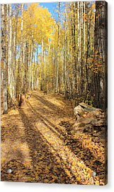 Golden Path Acrylic Print by Jim Sauchyn