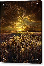 Golden Acrylic Print by Phil Koch