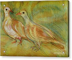 Golden Pigeons Acrylic Print by Anna Yurasovsky