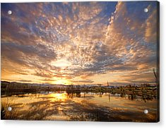 Golden Ponds Scenic Sunset Reflections 5 Acrylic Print by James BO  Insogna