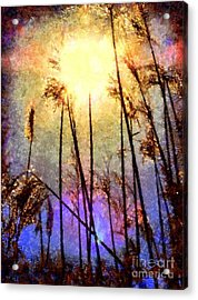 Golden Sun Rays On Beach Grass Acrylic Print