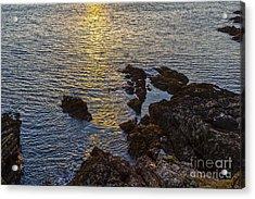 Golden Reflection Acrylic Print by Brian Roscorla