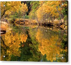 Golden Reflections Acrylic Print by Terry Garvin