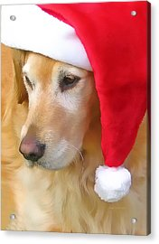 Golden Retriever Dog In Santa Hat  Acrylic Print by Jennie Marie Schell