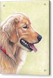 Golden Retriever Profile Acrylic Print by Charlotte Yealey
