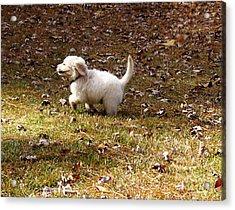 Golden Retriever Puppy Acrylic Print by Andrea Anderegg