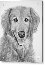 Golden Retriever Sketch Acrylic Print