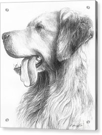 Golden Retriever Study Acrylic Print