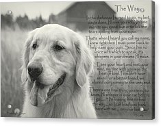 Golden Retriever The Way Acrylic Print