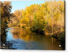 Golden River Acrylic Print