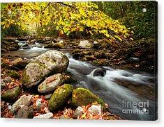 Golden River Rush Acrylic Print