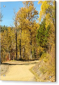 Golden Road 2 Acrylic Print by Curtis Stein