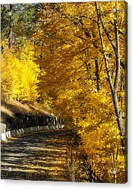 Golden Road Acrylic Print by Curtis Stein