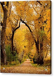 Golden Roads Acrylic Print by Steven Reed