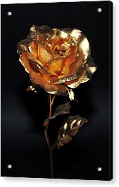 Golden Rose Acrylic Print