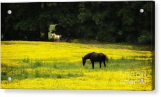 Golden Rule Acrylic Print by Cris Hayes
