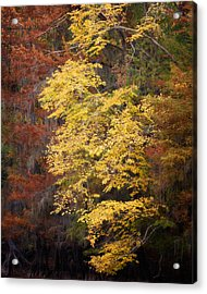 Golden Rust Acrylic Print by Lana Trussell
