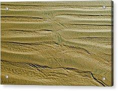 Golden Sand 5 Acrylic Print