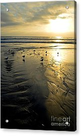 Golden Sandy Canvas Acrylic Print