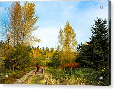 Acrylic Print featuring the photograph Golden Shortcut by Crystal Hoeveler