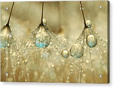 Acrylic Print featuring the photograph Golden Sparkles by Sharon Johnstone