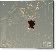 Acrylic Print featuring the photograph Golden Spider by Cheryl Del Toro