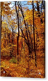Golden Splendor Acrylic Print