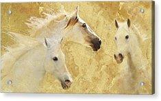 Golden Steeds Acrylic Print